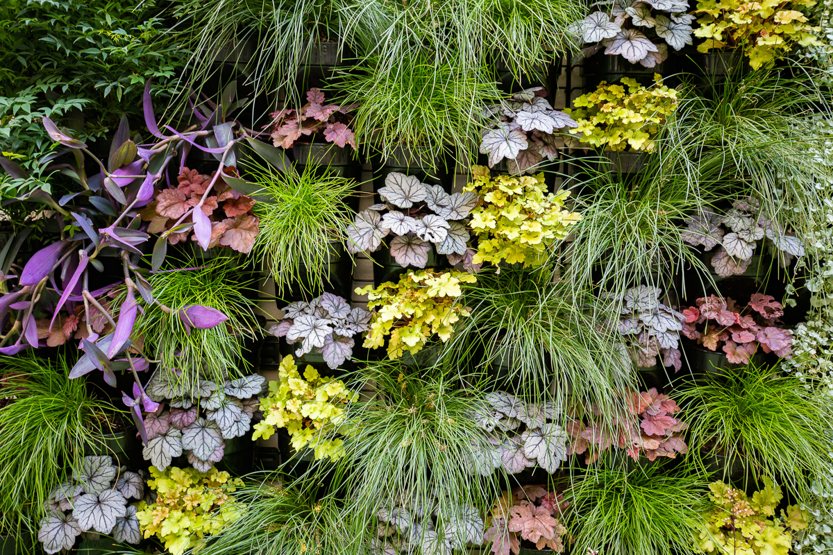 custom vertical garden installation by My Vertical Gardens, Melbourne