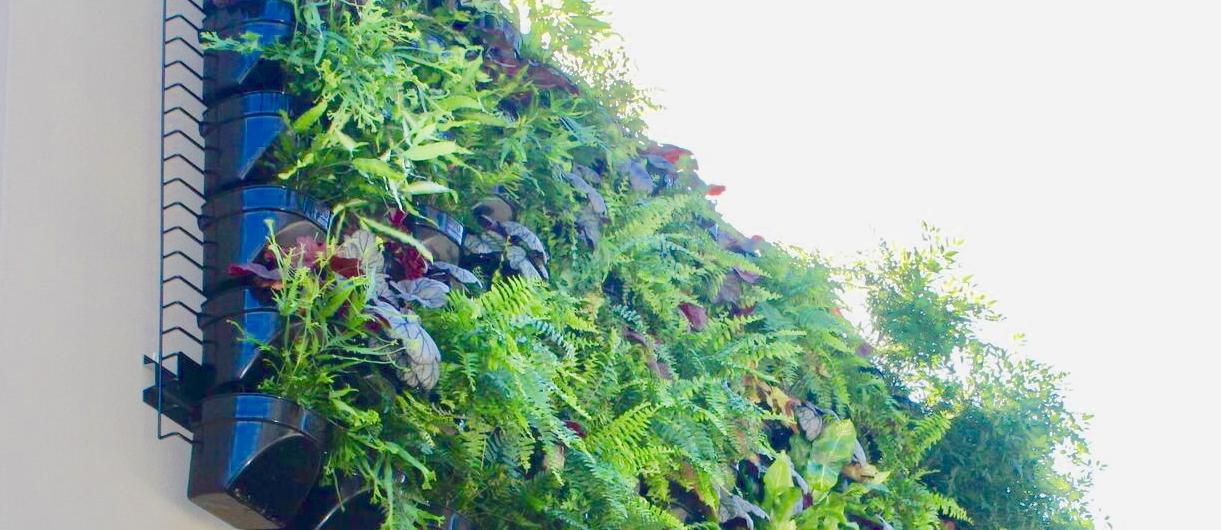 Walled garden vertical gardens green wall the process